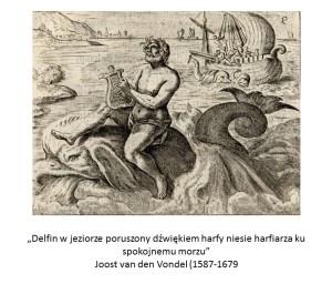 delfin-7